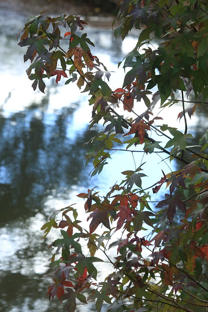 Leaves along Lake Matoka are beginning to turn colors.